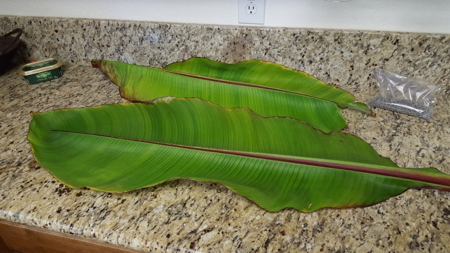 Preserving Banana Leaves